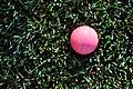 Wet Pink Ball (3674041622).jpg