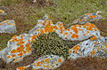 White Stones on Falklands2.JPG