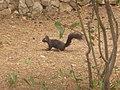 Wiewiórka - panoramio.jpg