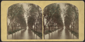 Willow Avenue, Ithaca, N.Y, from Robert N. Dennis collection of stereoscopic views.png