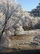 Winter grazing - geograph.org.uk - 638224.jpg