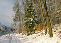 Winter im Teutoburgerwald2.jpg