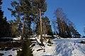 Winter woods 4 - panoramio.jpg