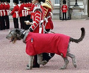 Military mascot - Mascot Irish Wolfhound