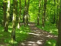 Woodland Path - geograph.org.uk - 279639.jpg