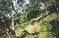 Woods, Loch Maree. - geograph.org.uk - 25835.jpg