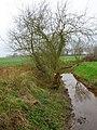 Woodside Stream - geograph.org.uk - 300456.jpg