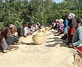 Workers at the Tariku Midergo Coffee Company in Ethiopia (6765874717).jpg