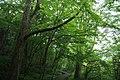 Yumotoshiobara, Nasushiobara, Tochigi Prefecture 329-2922, Japan - panoramio - taro gen (3).jpg