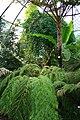 Zürich - Botanischer Garten (Uni) - Subtropen IMG 0786.JPG