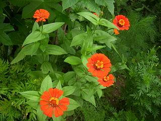 Organizmus rastlín je tvorený rastlinnými orgánmi