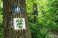 Zloty Stok, trails.JPG