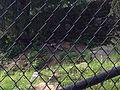 ZooAmerica - sleeping Wolf, Hersheypark, 2013-08-10.jpg