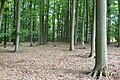 Zywiec Dziewieciolistny nature reserve in Puszcza Zielonka (7).JPG