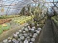 'Pinewood Cactus Nursery'.JPG