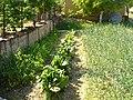 Блитва и кромид во Драчево 02.jpg