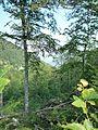В гората над Острец - panoramio.jpg