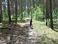 В лесу между Малым и Большим Козино - panoramio.jpg