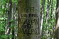 Голосіївський ліс DSC 0579.jpg