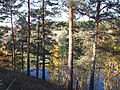 Долина р. Миасс (дер. Прохорово) - panoramio (53).jpg