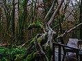 Драконовидное дерево.jpg