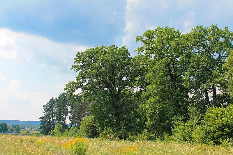 Північно-Мостівський ландшафтний заказник, Рівненська область. Oksana Golovko (CC-BY-SA-3.0)