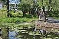 Озеро з жовтими глечиками біля Водоспад біля Замку Радомисль.jpg