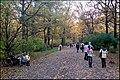 Осень в Ботаническом саду - panoramio (2).jpg