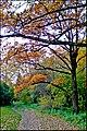 Осень в Ботаническом саду - panoramio (5).jpg