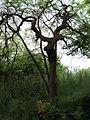 Парк шума Гази Баба во мај (160).JPG