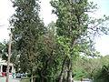 Парк шума Гази Баба во мај (5).JPG