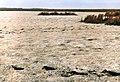 Повсть із водоростей і макрофітів на пересхолому восени дні Булахівського лиману.jpg
