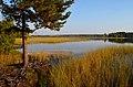 Рязанская область.Ласковское озеро.1.jpg