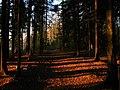 Солнечный вечер в лесу - panoramio.jpg