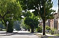 Тернопіль - Вулиця Генерала Шухевича - 17073644.jpg