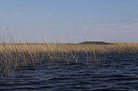 Тростники на озере Полисто.jpg
