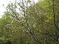 Украина, Киев - Голосеевский лес 17.jpg