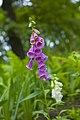 Цветы в парке Шевченко DSC 5230.jpg