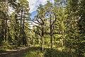 Экологическая тропа MG 9540.jpg