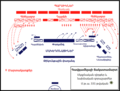 Գավգամելայի ճակատամարտ - սկզբնական զորաշարժեր - hy.png