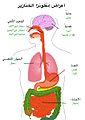 أعراض إنفلونزا الخنازير.jpg