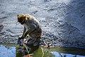 مجموعه عکس از رفتار میمون ها در باغ وحش تفلیس- گرجستان 23.jpg