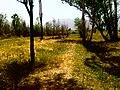 پارک جنگلی تپه - panoramio.jpg