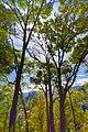 แนวป่าอุทยานแห่งชาติตากสินมหาราช.jpg