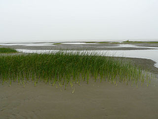 Jiuduansha Intertidal wetlands of Shanghai