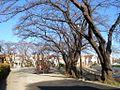 井田さくらが丘公園 - panoramio.jpg