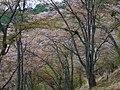 吉野山 上千本にて Kami-sembon in Yoshinoyama 2013.4.09 - panoramio.jpg
