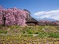 春の小淵沢 (Fiore Kobuchizawa in spring) 19 Apr, 2014 - panoramio.jpg