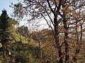 枫林古道上 - panoramio (1).jpg
