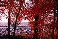 澄川公園にて - panoramio.jpg